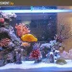 Пресноводный аквариум 320 литров