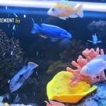 Оформление аквариума с цихлидами